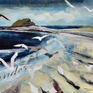 Gulls on Periglis, St Agnes