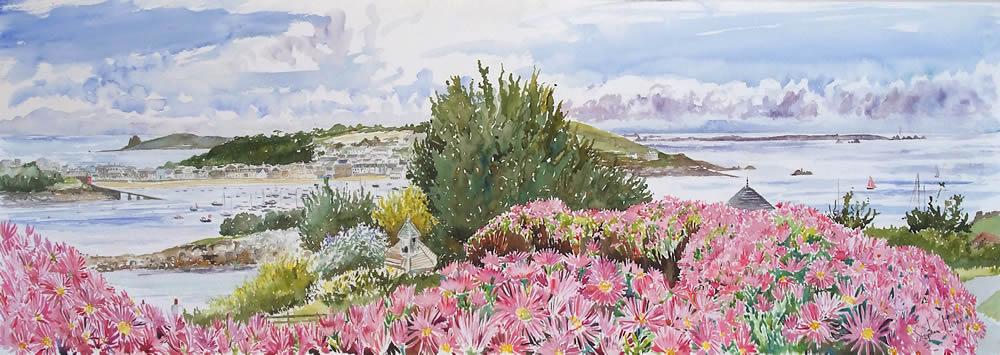 Moyana Mesembryanthemums (St Marys)